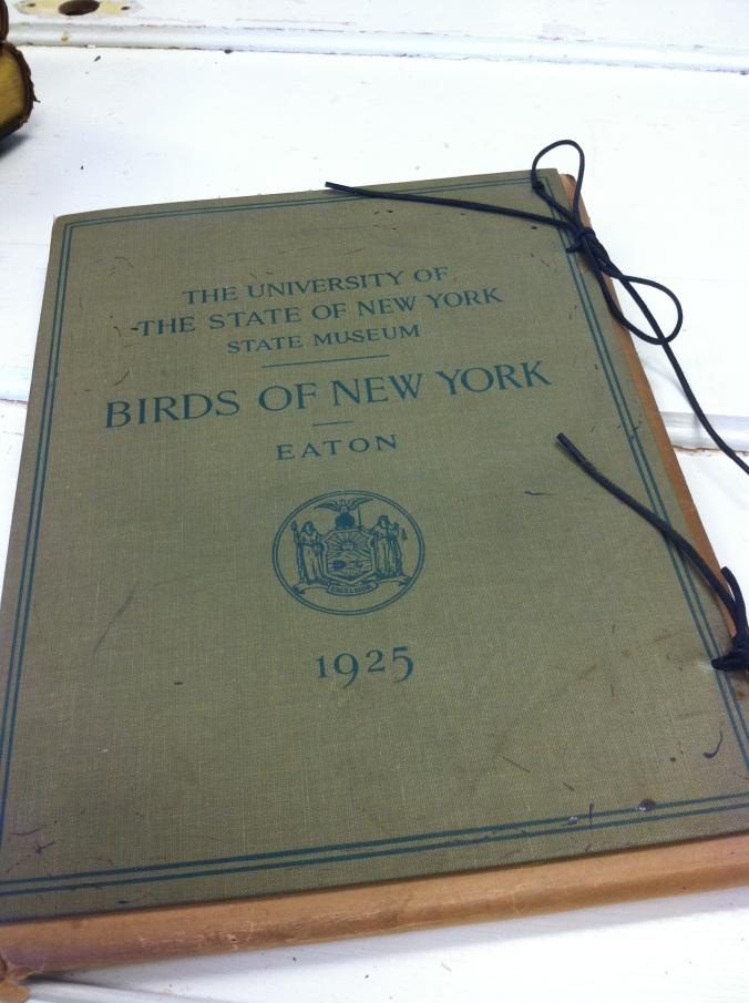 Birds_NY_1925